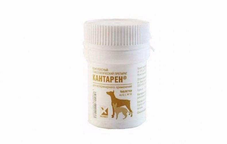 Кантарен: инструкция по применению для кошек, капли и уколы, побочные действия и противопоказания