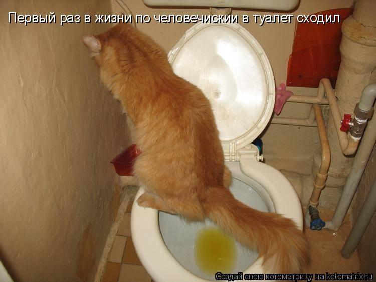 Кошка после переезда не ходит в туалет и не ест