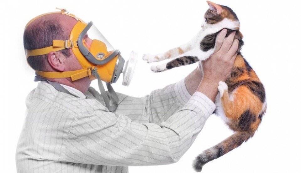 Аллергия на кошек: как проявляется и лечится