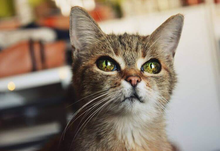 Приметы и суеверия про кошек
