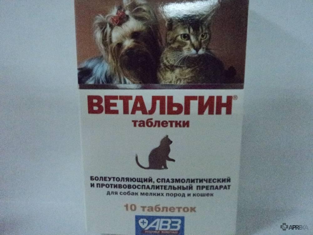 Какие обезболивающие препараты можно давать кошке в домашних условиях