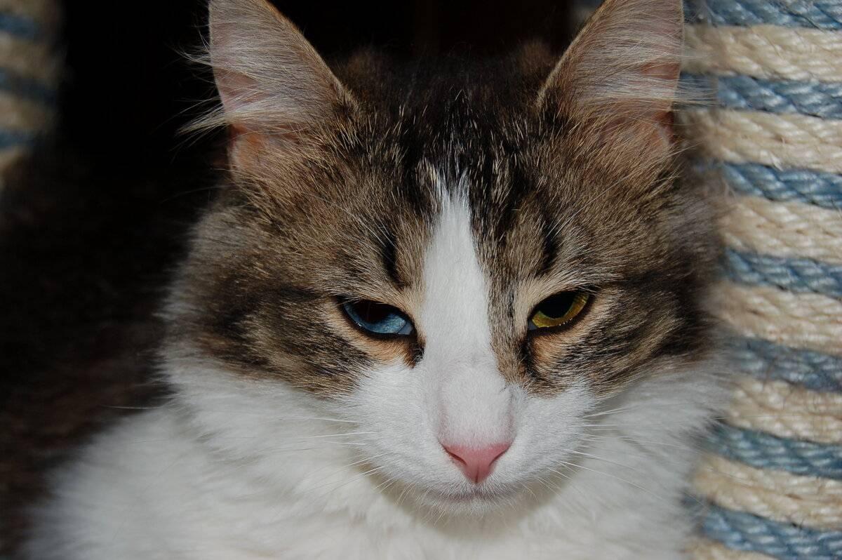 Почему коты мурчат. правда ли, что кошка ложится на больное место человека
