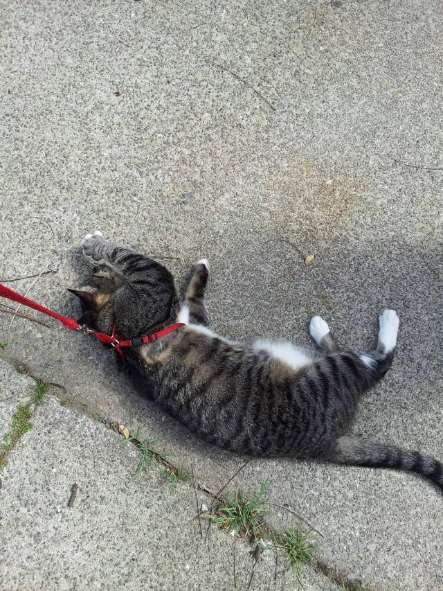 Как часто и сколько дней гуляет кошка: рассказываем в общих чертах
