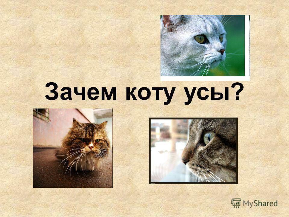 Анатомия кота – все, что нужно знать о строении животного