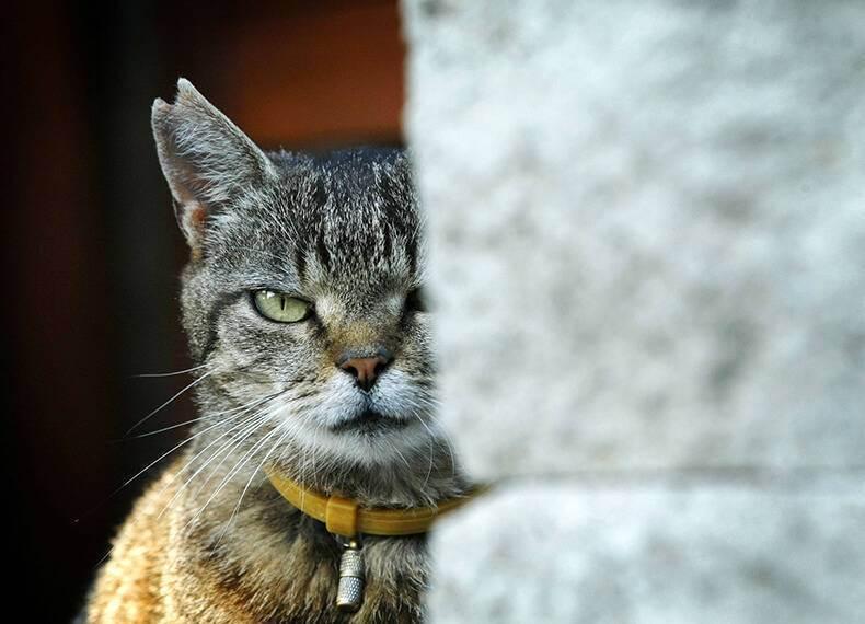 Хитрости, к которым прибегают кошки для манипуляции хозяевами