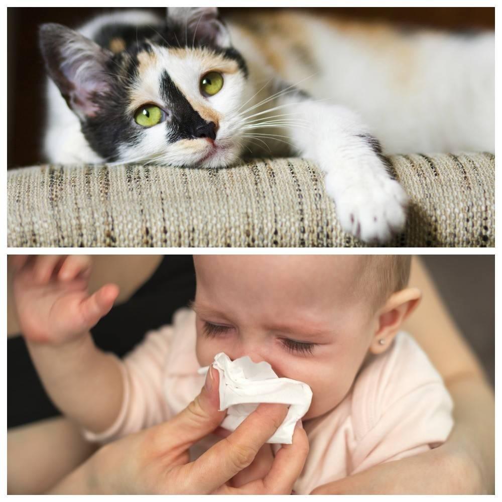 Как проявляется у грудничков аллергия на кошек