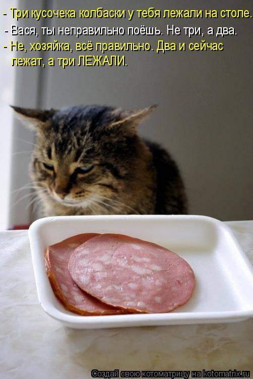 Котёнок плохо ест сухой корм — что делать, как приучить