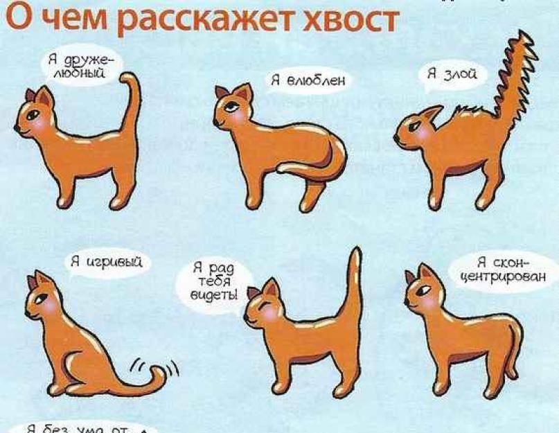 Почему у кота дрожит хвост. кошка трясет хвостом: что это значит? общение при помощи тела