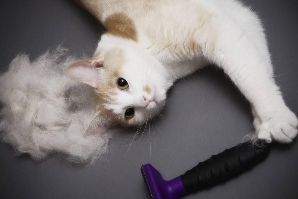 Список 4 лучших фурминаторов для кошек и основы подбора инструмента для шерсти.