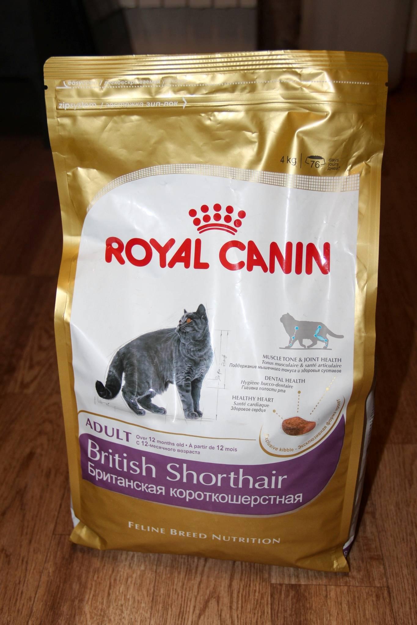 Как правильно выбрать корм для британской кошки?
