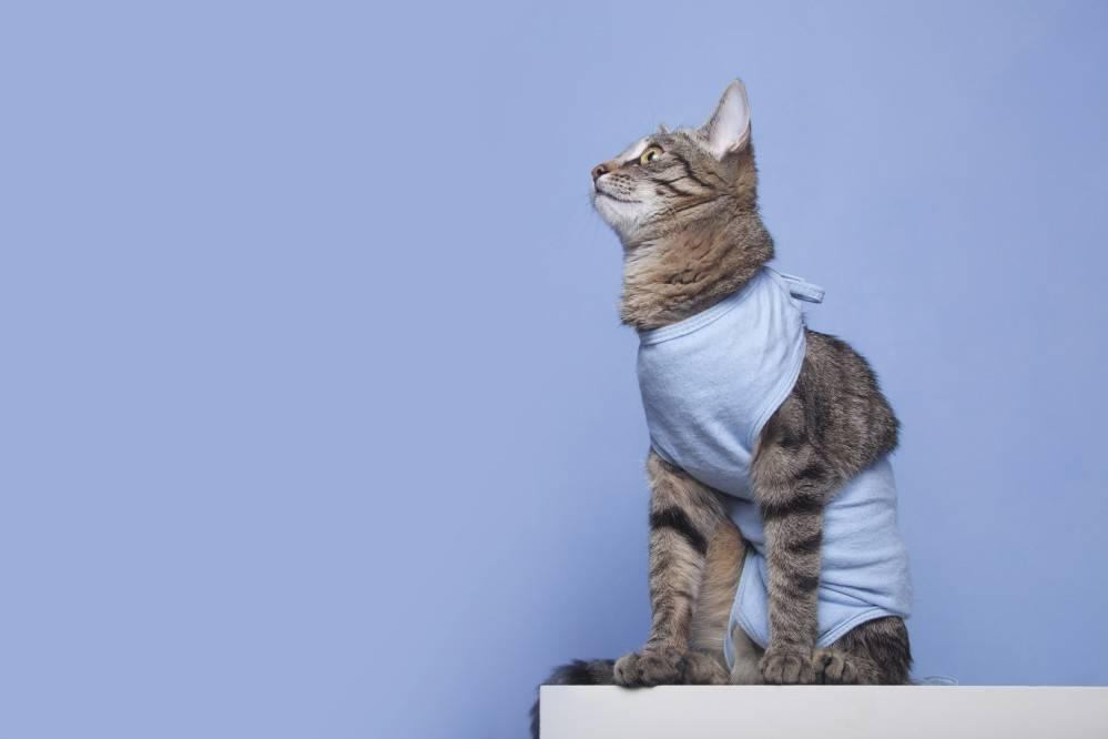 Кот кастрированный но постоянно орет - кошки и собаки простыми словами
