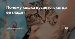 Почему кот кусается, когда его гладишь