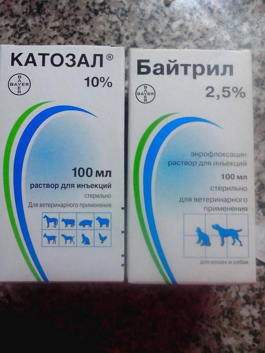 Как спасти кошку от 11 тяжёлых инфекций: противомикробный препарат байтрил