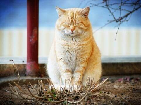 Успокоительное для кошек: виды, показания к применению, обзор эффективных средств, побочные действия, отзывы