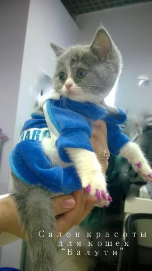 Преимущества и недостатки антицарапок для кошки