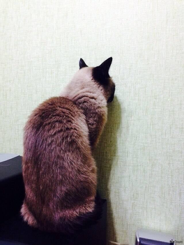 Почему кошка смотрит в стену? почему кот смотрит в пустоту? почему кошка смотрит в пустоту
