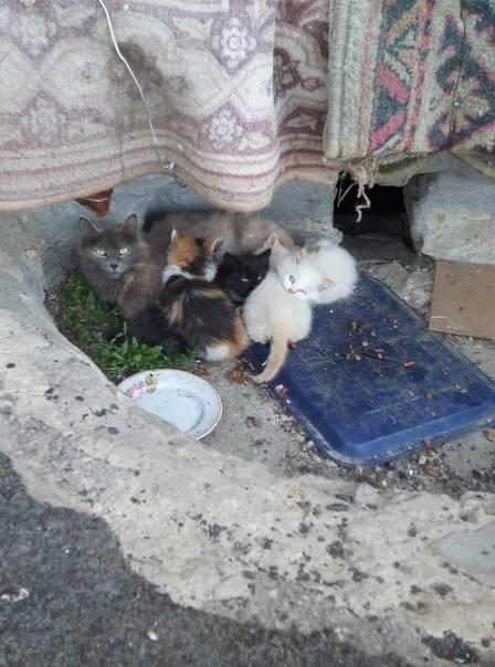 Куда отдать кошку