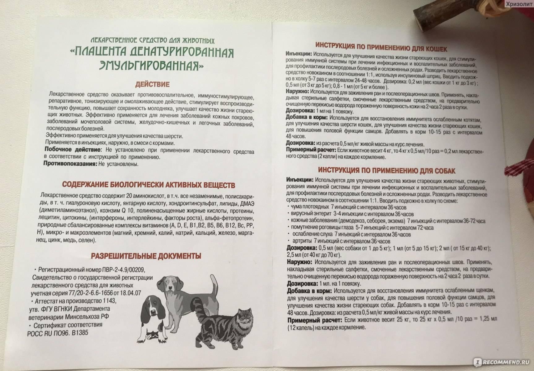 Ронколейкин для кошек: инструкция по применению в ветеринарии, дозировка и схема лечения
