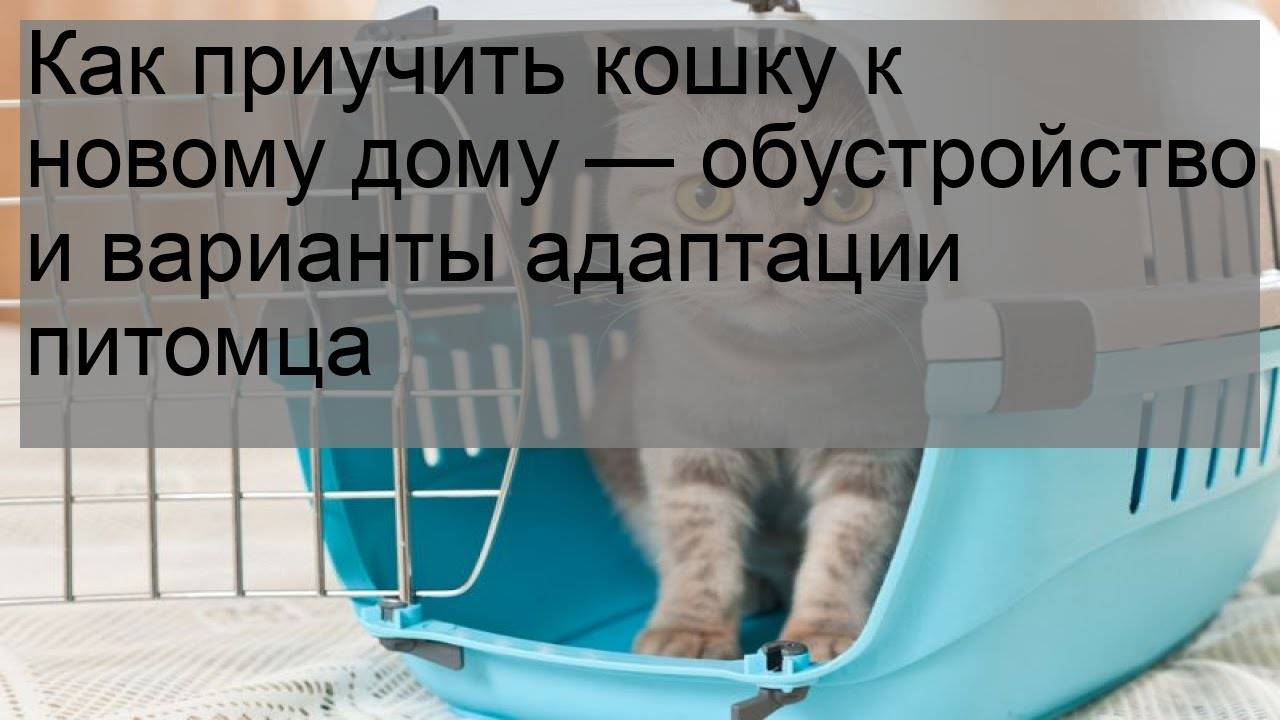 Как адаптировать кота к новому дому?