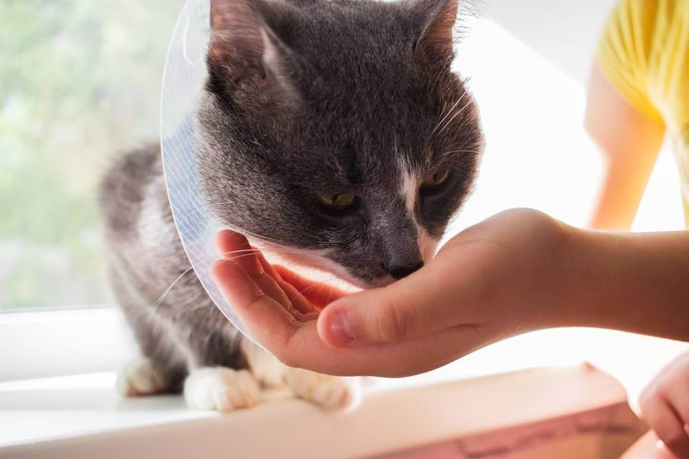 Отравление у котов и кошек: как помочь питомцу?