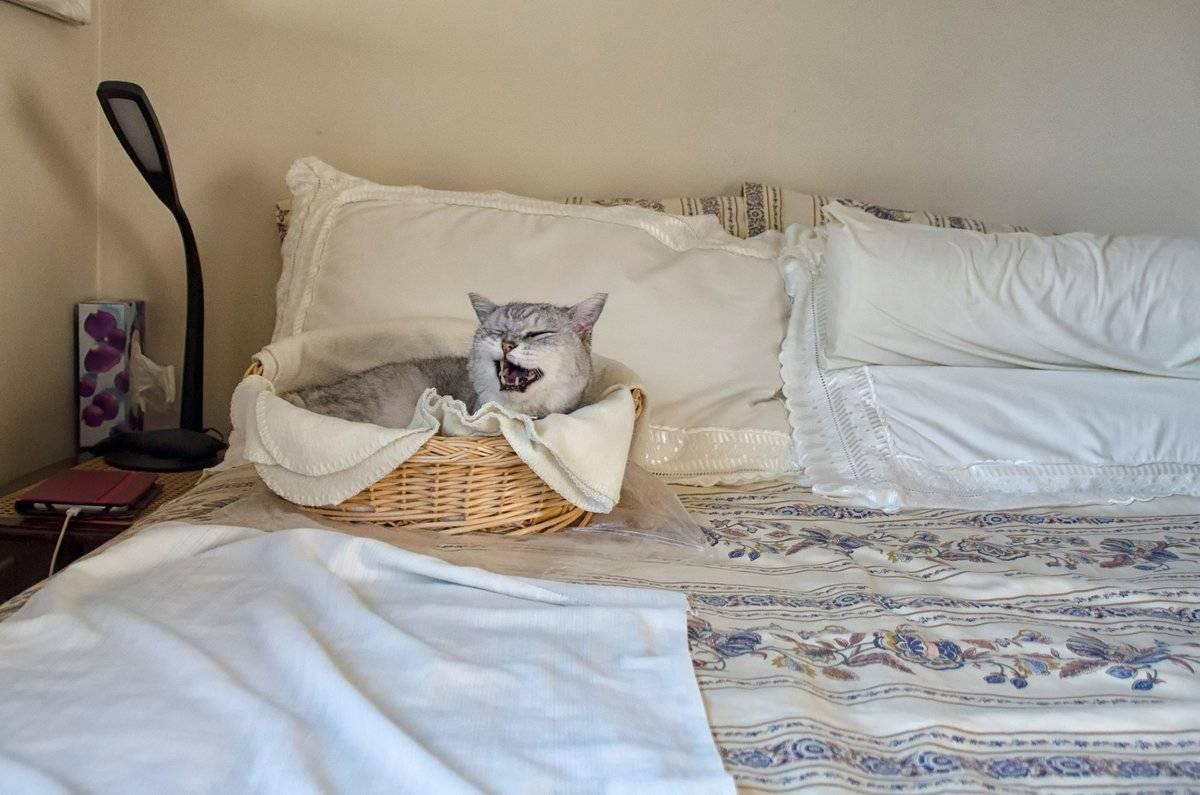 Плохо или хорошо спасть в одной постели со своим котом по суевериям
