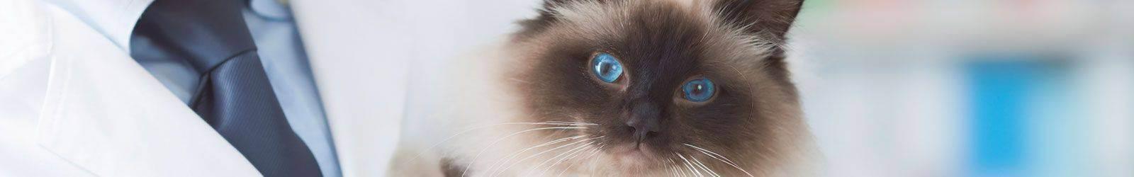Риски, связанные с вакцинацией кошек.