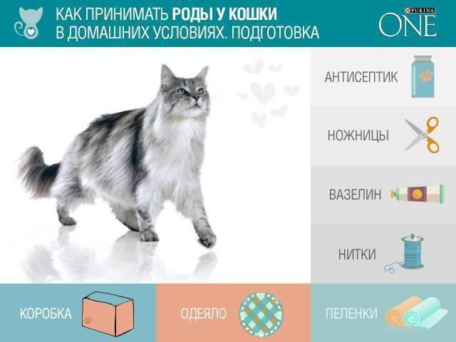 Преждевременные роды у кошки: как спасти и выходить котят
