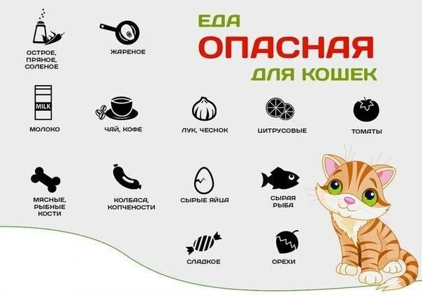 Как и чем кормить котят в 3 недели: способы и режим кормления, заменители молока или смеси, витамины, первый прикорм