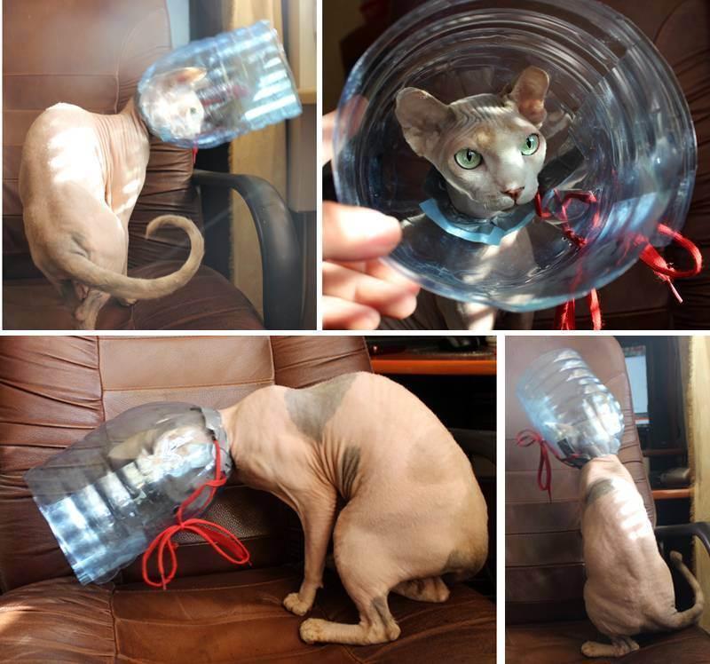 Елизаветинский воротник для кошек своими руками из пластиковой бутылки или картона