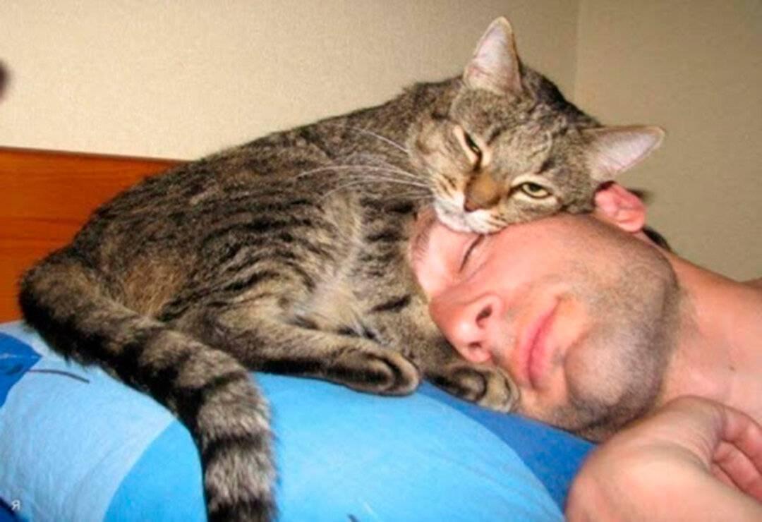 Кошка вылизывает хозяина, что это значит: причины бывают разные