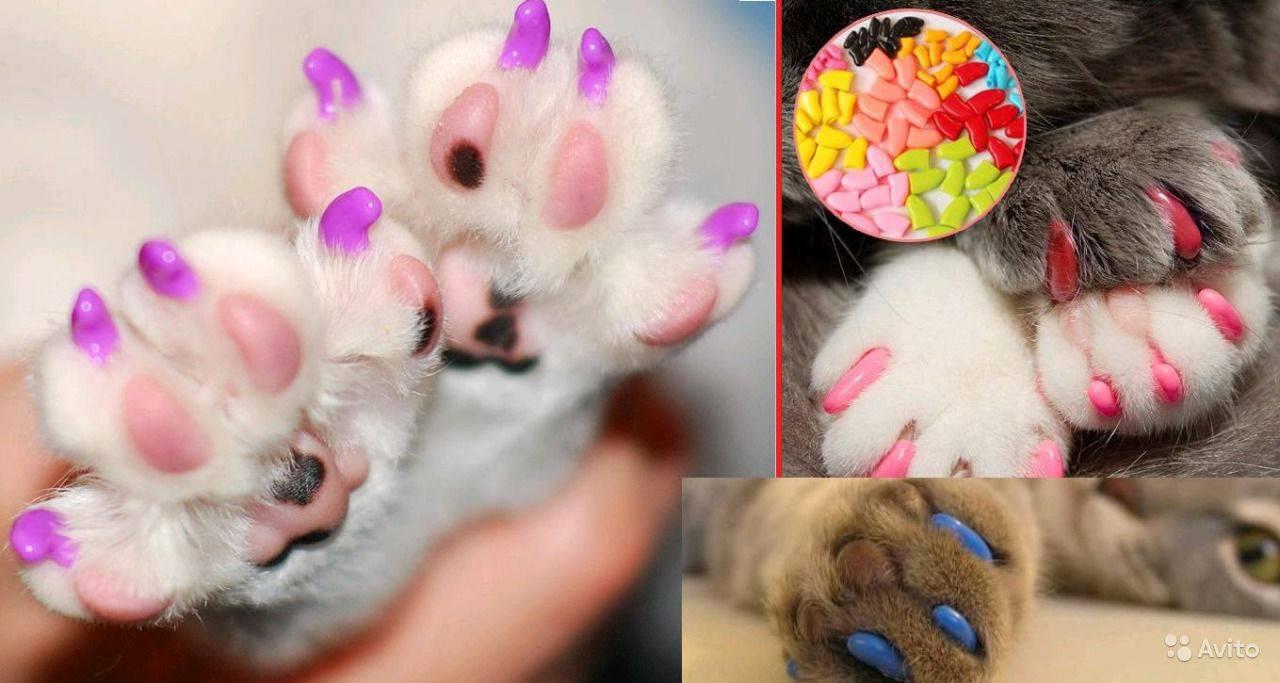 Как клеить ногти кошке (антицарапки): инструкция, плюсы и минусы, рейтинг накладок