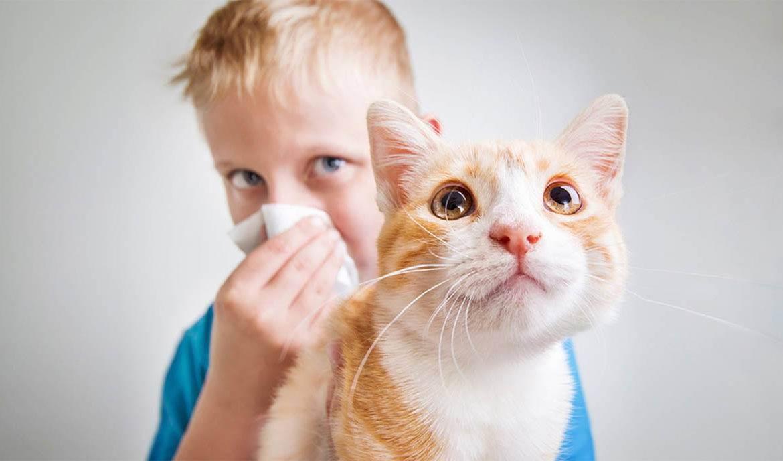 Правда и мифы об аллергии на кошек