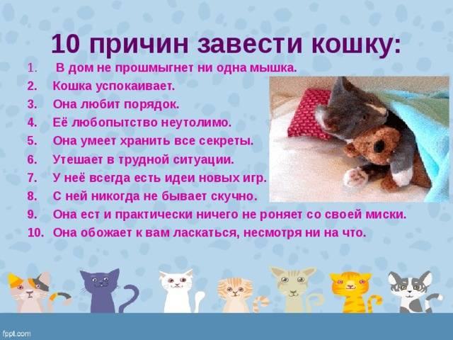 7 причин, почему кот постоянно просит есть: кот очень много ест, что делать