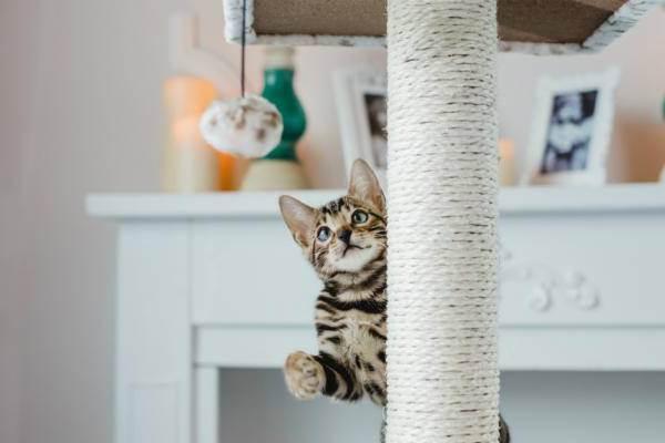 Гепатоз у кошек | заметки ветеринара