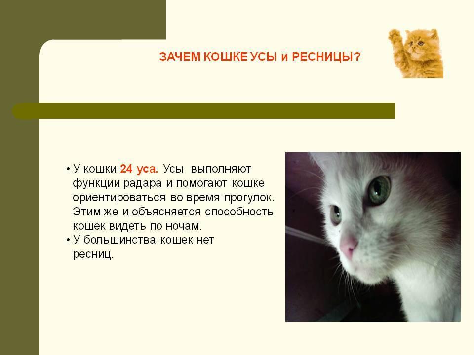 Почему у кошек выпадают усы?