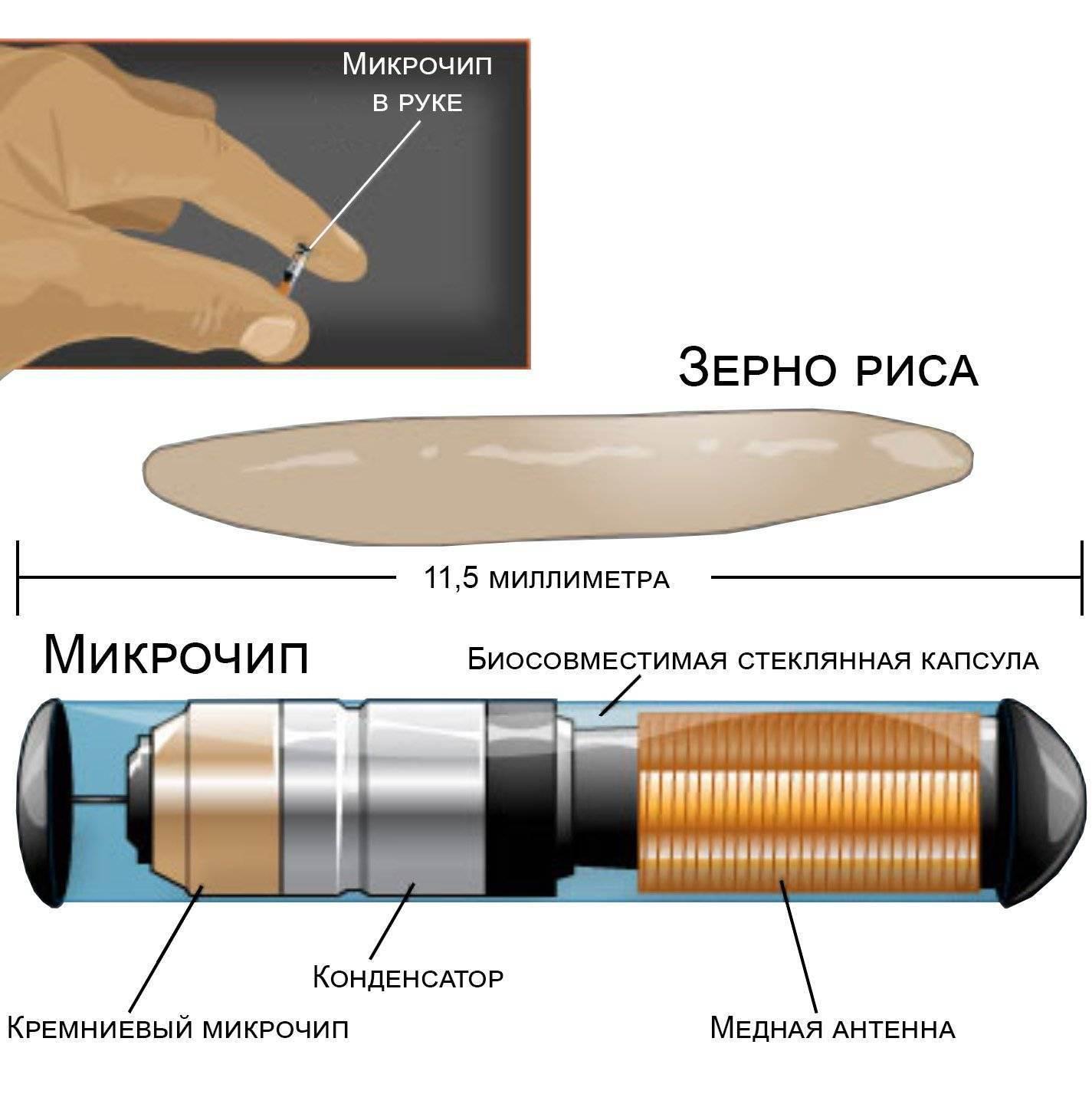 Имплантация rfid-чипа: с чего начать свой путь в биохакинге?