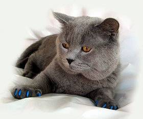 Антицарапки — накладки на когти для кошек и маленьких котят — силиконовые колпачки и насадки