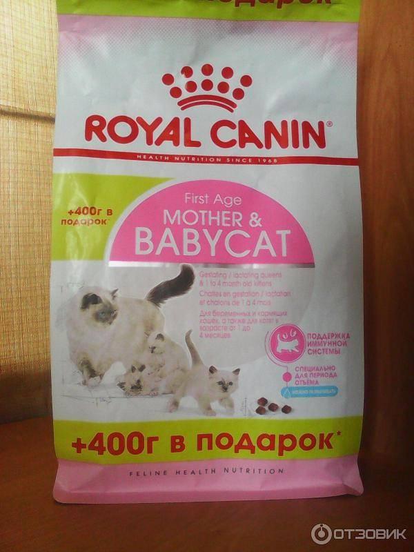 Можно ли кормящую кошку кормить влажным кормом