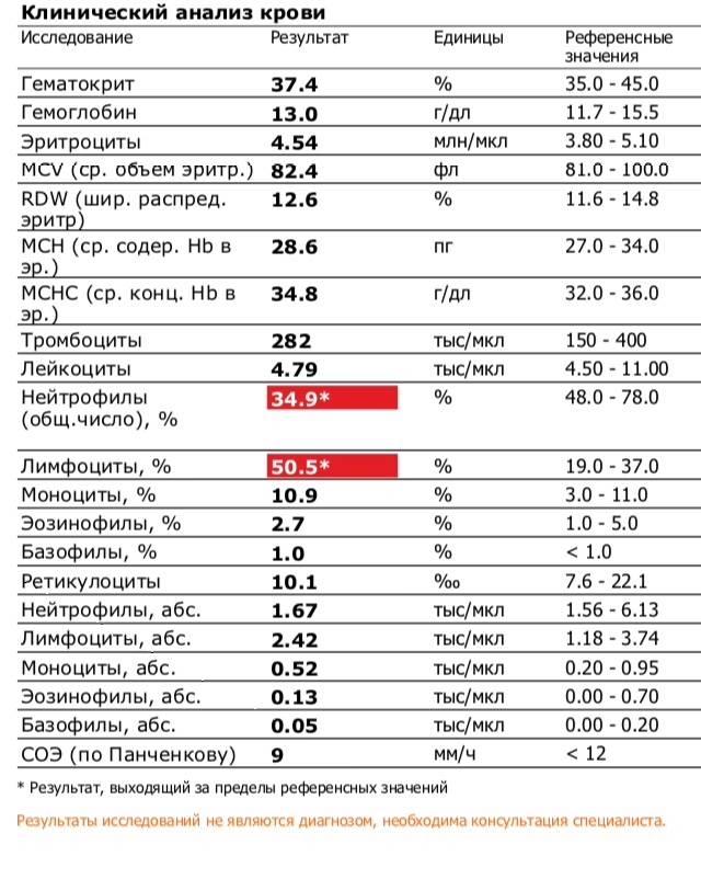 Лейкоциты у кошки понижены: что делать, если понижены | норма, в крови, в моче