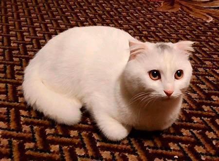 Агрессия у кошек и котов: основные причины и способы решения проблемы