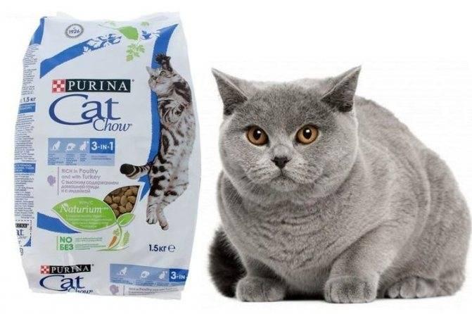 Питание кота при мочекаменной болезни натуральными продуктами