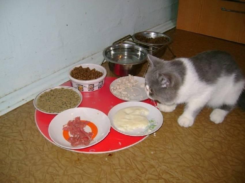 Когда котята начинают сами кушать?