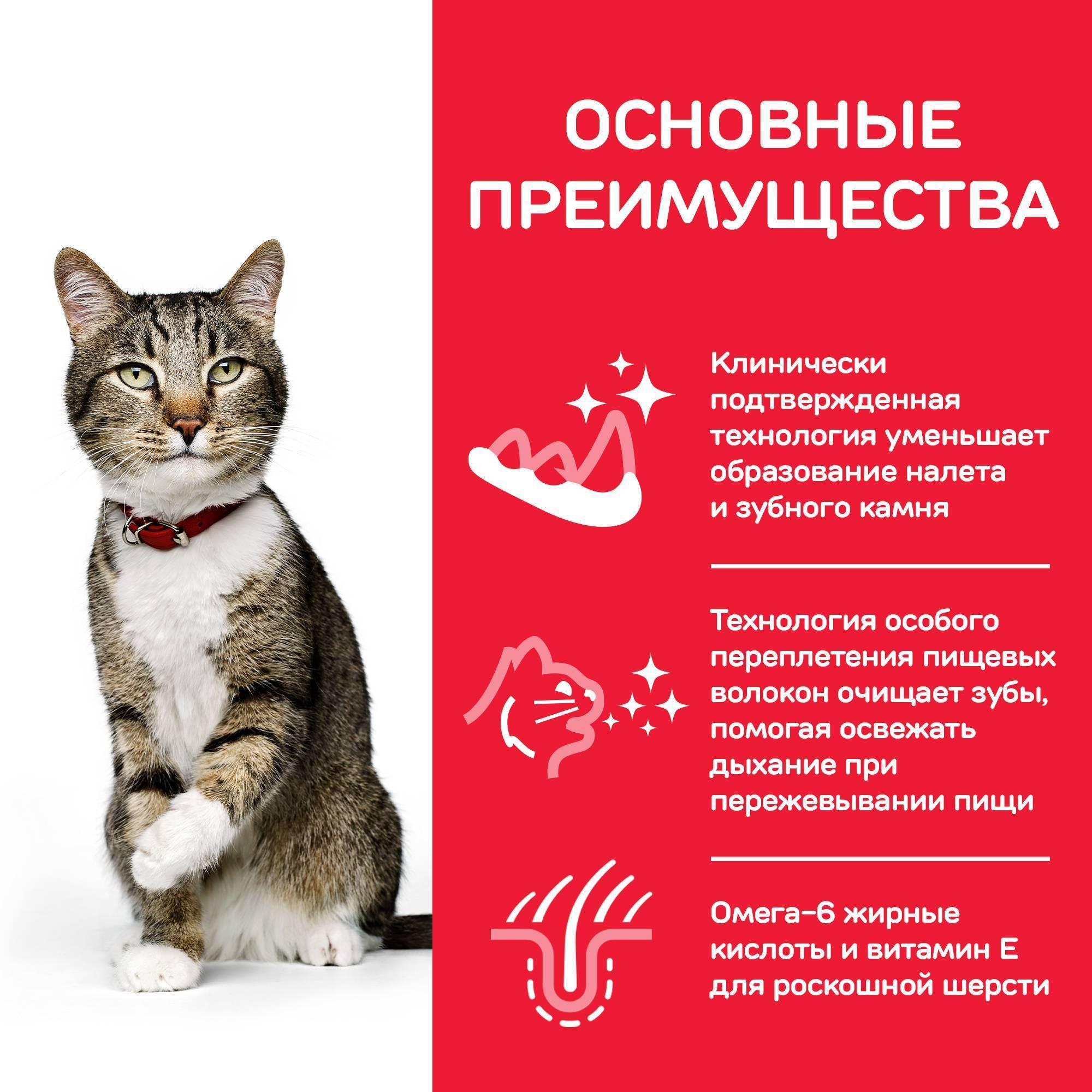 Правила ухода за зубами у кошек