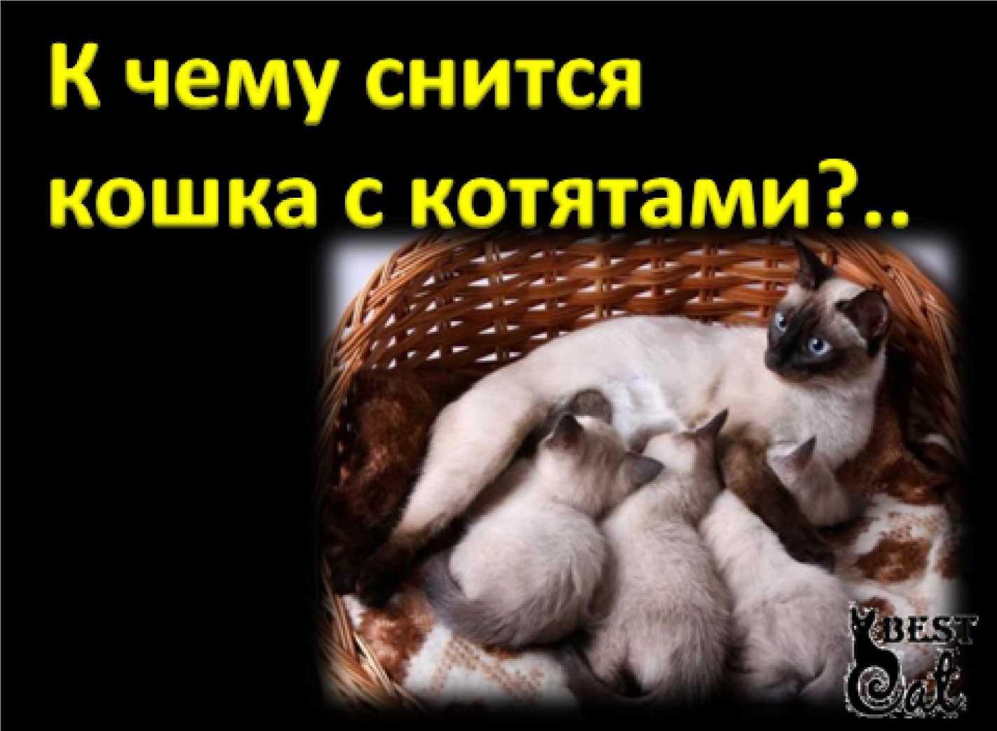Много разных кошек и котят