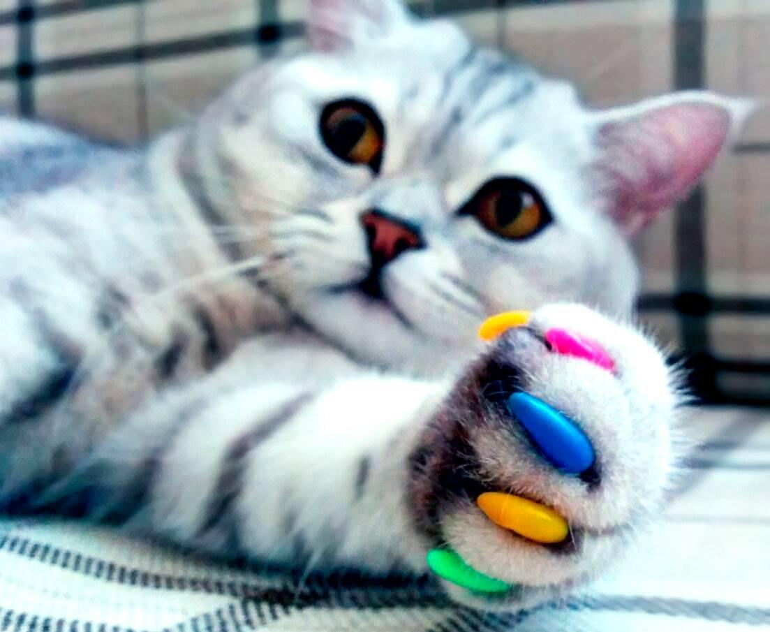 Антицарапки для кошек: польза и вред, инструкция по применению