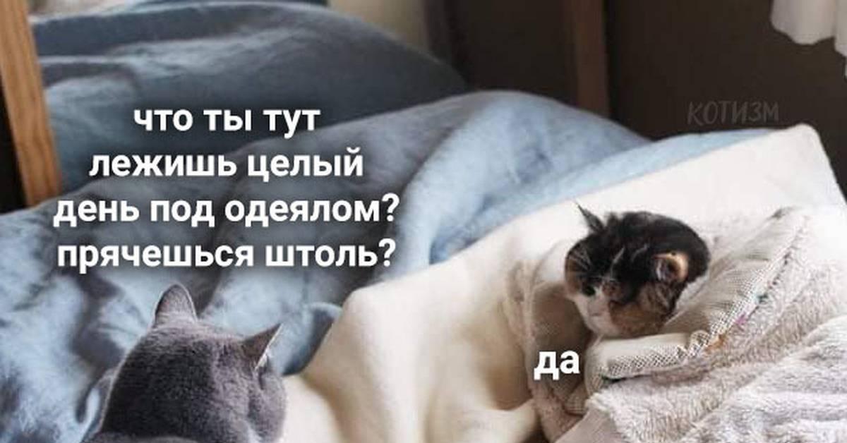 Топ-4: почему кошка мяукает и прячется под одеяло