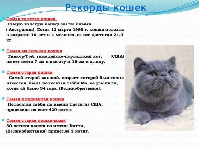 Способы определить возраст котёнка в домашних условиях