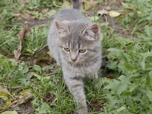 Популярные английские имена для кошек и котов