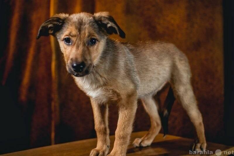 Беспородные собаки-дворняжки: описание и достоинства
