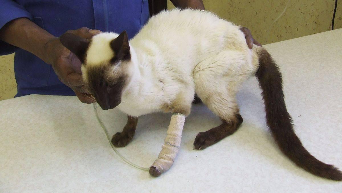 Почечная недостаточность у кошек и котов - симптомы, лечение, препараты, причины появления | наши лучшие друзья
